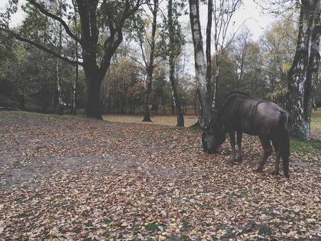 Wildlife Animal Animals Nature Photography Beautiful Nature Forrest Autumn Trees Tree Autumn Leaves Landscape Authentic Moments Autumn Colors Lake Wood