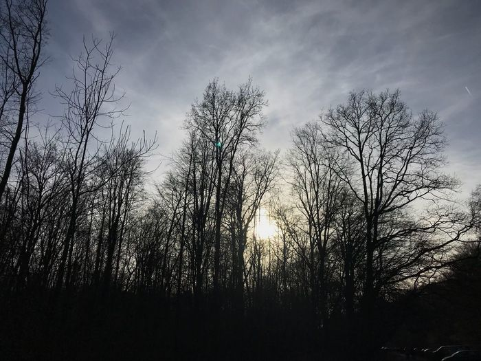 Beautiful day for a walk. Beauty In Nature Simplicity No Filter No Filter, No Edit, Just Photography Woods Sunset Tree Nature Sky Silhouette No People Low Angle View Tranquility Outdoors Bare Tree Beauty In Nature Day