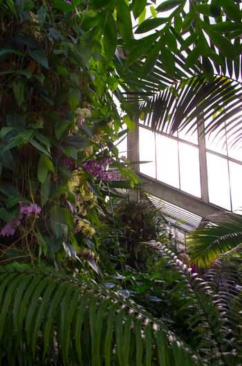 kew Gardens Kew Gardens Nikon Architecture Beauty In Nature Botany Built Structure Ceiling Day Freshness Green Color Greenhouse Growth Houseplant Indoors  Leaf Nature No People Palm Leaf Palm Tree Plant Plant Nursery Plant Part Tree Tropical Climate