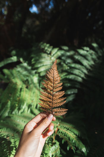 Cropped image of person holding fern
