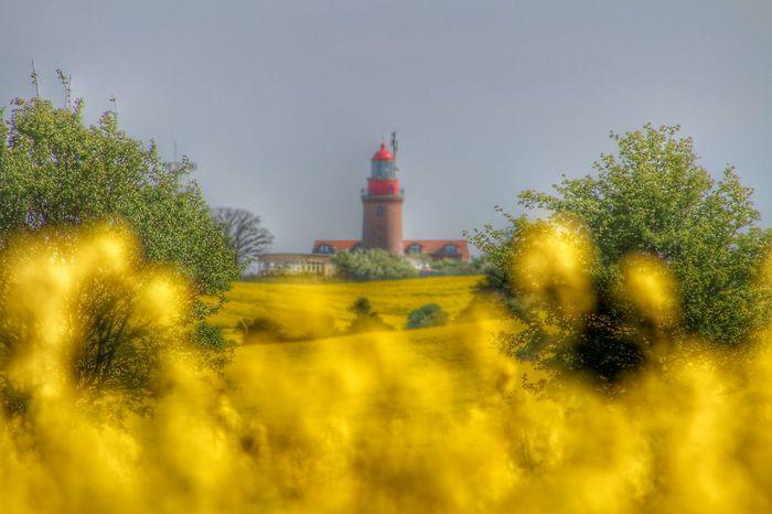 Leuchtturm Bastorf Leuchtturm Lighthouse Phare Bastorf Colza Rapeseed Raps Rapeseed Field Champ De Colza Germany Deutschland Allemagne Ostsee Mer Baltique Baltic Sea