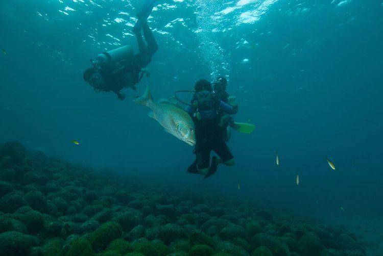 Person scuba diving in sea