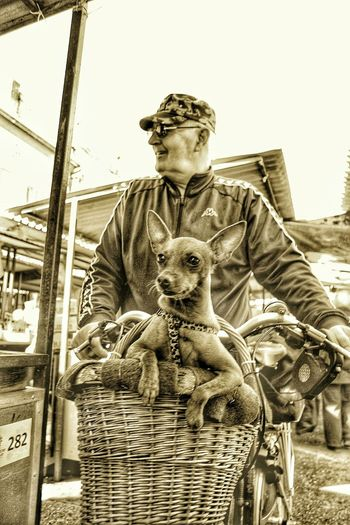 Onemanandhisdog Dog Basket Dogslife