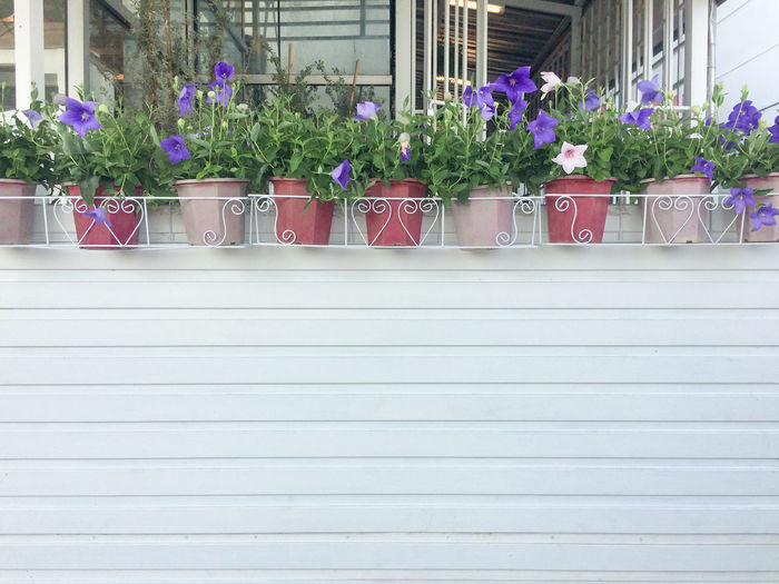 Potted plants against wall in city