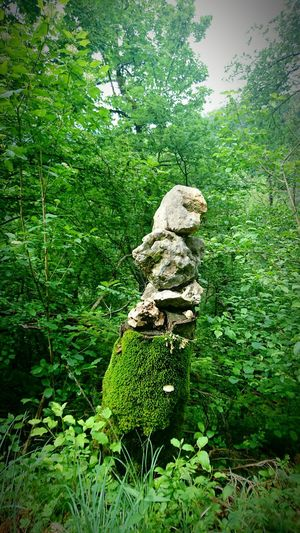 Forest Switzerland Green Stones Nature Brunnental Pareidolia Stone - Object Fairytale  Woods