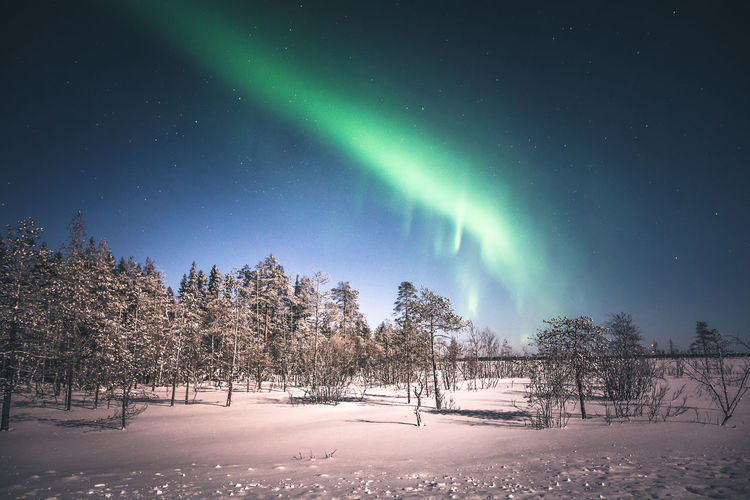 Wilderness lights Tree Snow Beauty In Nature Winter Cold Temperature Sky Night Scenics - Nature Tranquility Nature Green Color No People Tranquil Scene Natural Phenomenon Star - Space Astronomy Aurora Polaris Landscape Moonlight Explore Lapland Travel Photography Nature_collection Outdoors