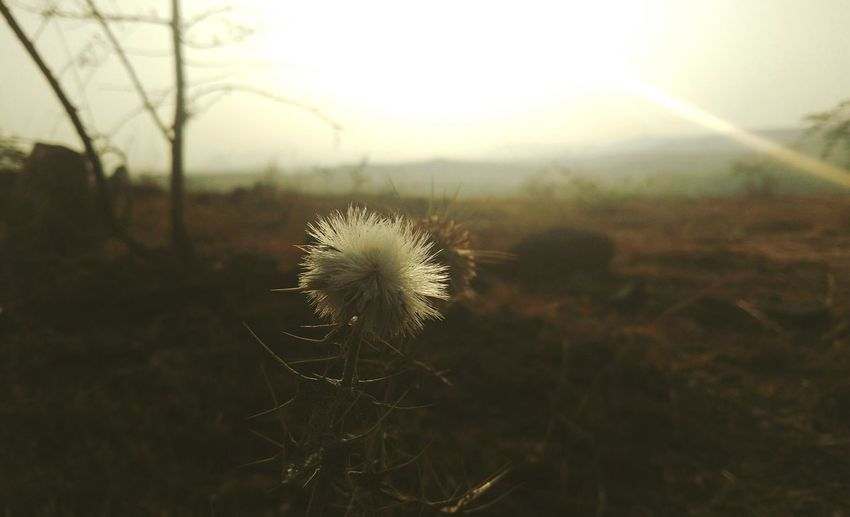 Break The Mold Nature Growth Beauty In Nature Fragility Close-up Outdoors Plant No People Day Sky Thistle Freshness First Eyeem Photo EyeEmNewHere