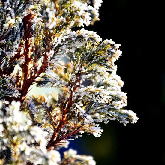 Nature Creative зима Природа