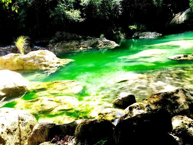 The green paradise Nature Water Green Color Beauty In Nature LoveNature Rock - Object Floating On Water