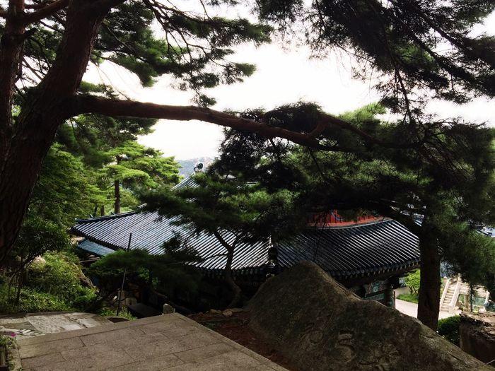 Tree Sky 북한산 First Eyeem Photo