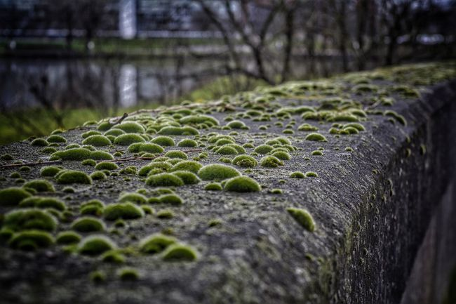 """Wall Hanging Out Check This Out Taking Photos Light And Shadow Walking Tour Nikon D5200 Eye4photography  """" Walking tour of bryozoans """"😊😊😊 EyeEm Nature Lover Showcase: January"""