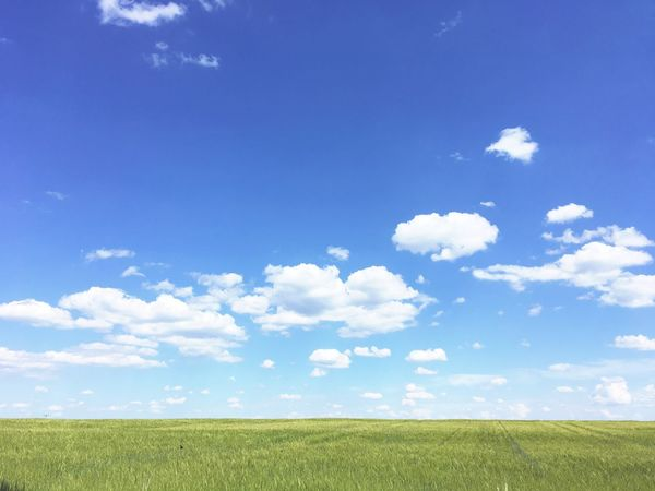 Premium Collection Sky Cloud - Sky Beauty In Nature Field Tranquil Scene Tranquility Land Blue Plant Landscape Scenics - Nature Nature Grass Environment No People Day Idyllic Green Color Growth Sunlight