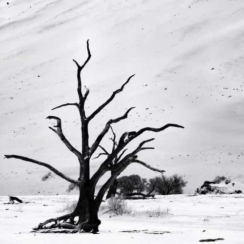 Petrified Tree In The Deadvlei