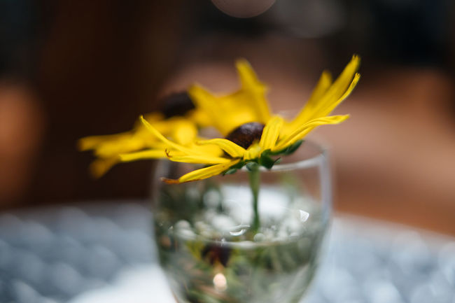 Close-up Day Drink Flower Flower Head Fragility Freshness Indoors  Nature No People Refreshment Sursee Table Water Wysamschtig Sursee Yellow