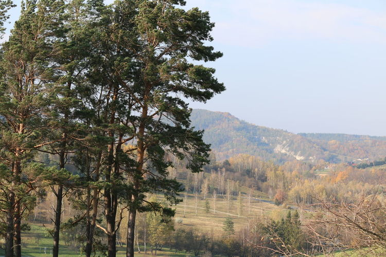 Bäume Und