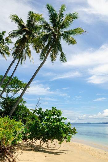 Palm trees on beach against sky
