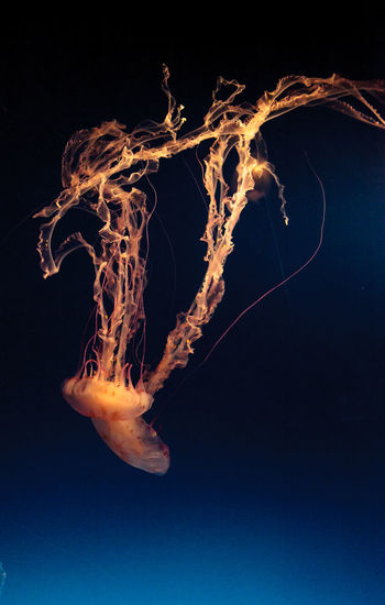Close-Up Of Jellyfish Undersea