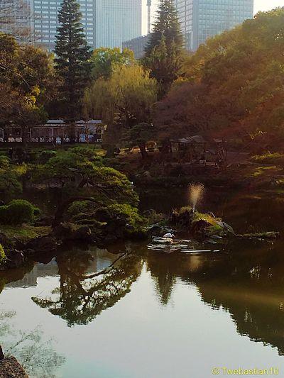 Pond in Hibiya