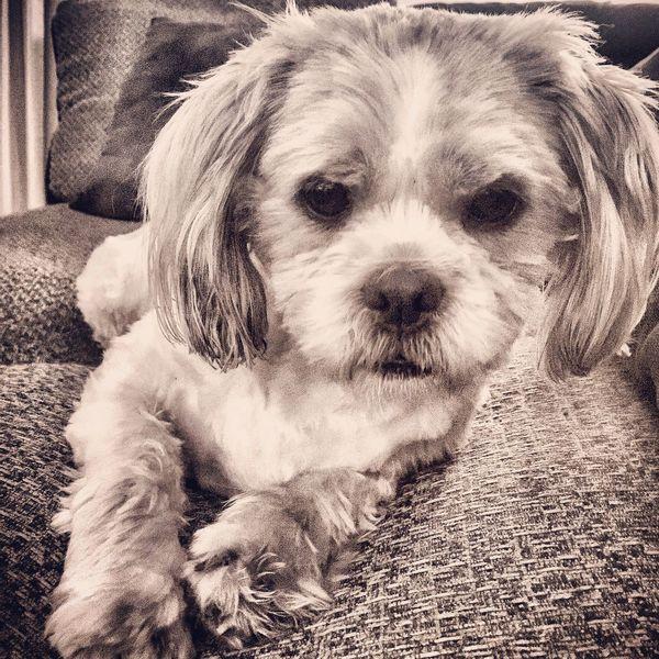 Dog Pets Portrait