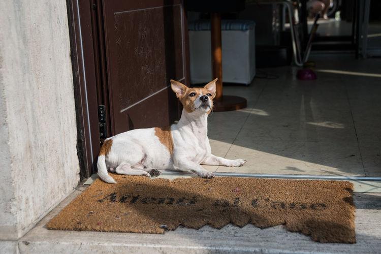 Dog resting on doorway