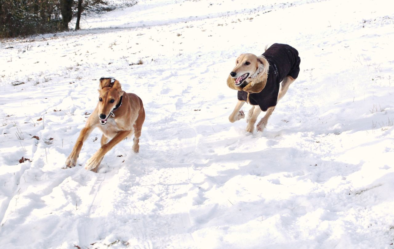 Dogs Running On Snow Covered Field