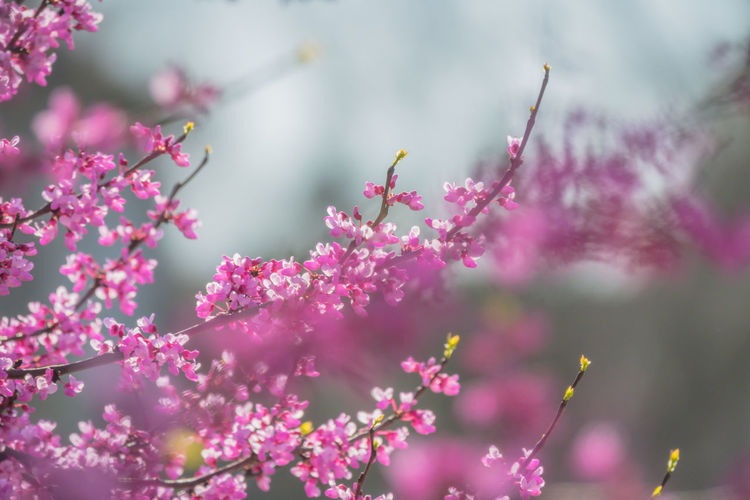 Animal Themes Beauty In Nature Branch Close-up Day Flower Flower Head Flowering Plant Focus On Foreground Fragility Freshness Growth Nature No People Outdoors Petal Pink Color Plant Selective Focus Springtime Vulnerability