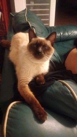 Cat Hello Heyyyyyyyyy Hey  Bastet Kitty Kitty Cat Feline Awww Awww So Cute <3 I See You