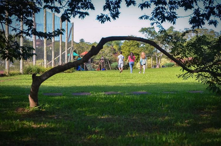 Nature Walking Around Tree Square Brasil Brazil