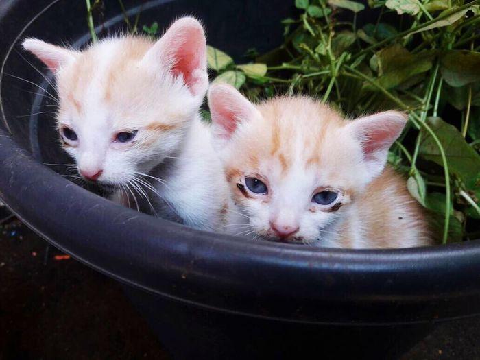 My New Kittens