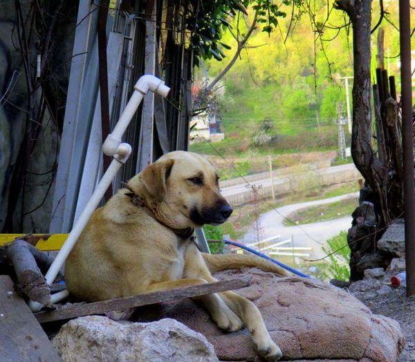 Zonguldak Iliksu Eyem Nature Lover Dog❤