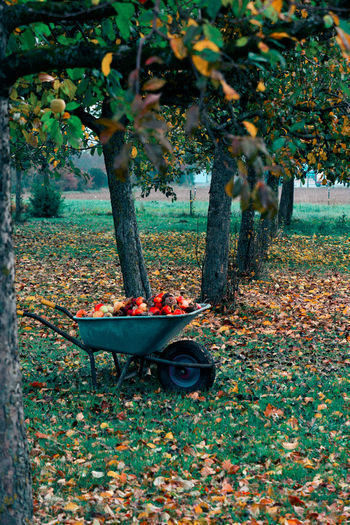 Fruits growing on field during autumn