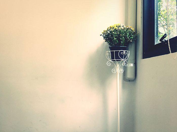Window Flower Nature Day Tree Indoors