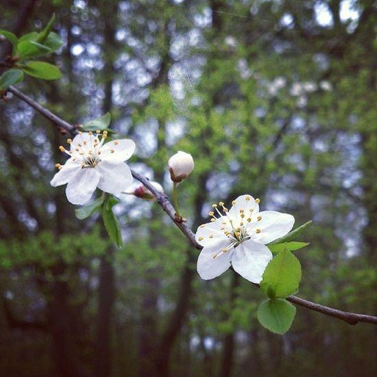 весенний_лес Лес Forest spring_forest