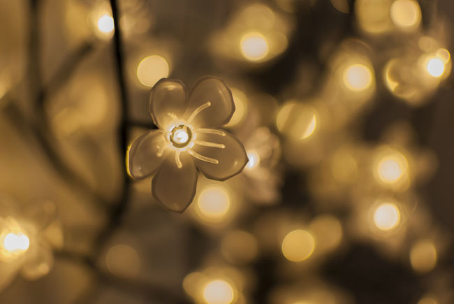 Flower led lights with blurred background Close-up Indoors  No People