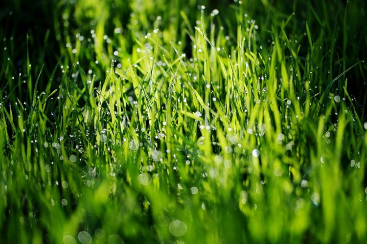 abstract nature Beauty In Nature Nature Photography My Point Of View Focus On Foreground Reinheimer Teich Sunrise Abstract Backgrounds Full Frame Drop Close-up Grass Green Color Plant Blade Of Grass Droplet Water Drop Green Grassland Young Plant