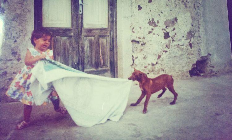 Me Dog Lovehate Memories