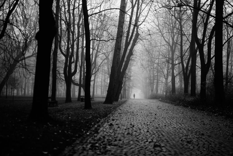 Stay on the path The Week on EyeEm Autumn Monochrome Street Photography Light And Shadow Capture The Moment Black And White Tree Forest Plant Fog Trunk Tranquility Tree Trunk Land Nature WoodLand Tranquil Scene Road Spooky Non-urban Scene No People Bare Tree Scenics - Nature Dirt Road Direction Outdoors Dark