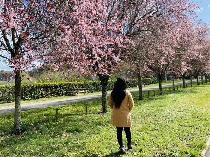 Rear view of woman standing on cherry blossom