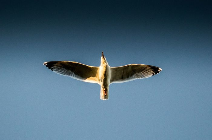 Hi Above Wings Flight Outstretched Bird Sea Gull
