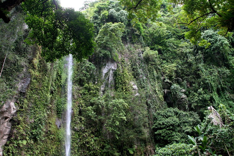 Beauty In Nature Green Color Motion Nature Outdoors Philippines ❤️ Tree Waterfall Waterfalls