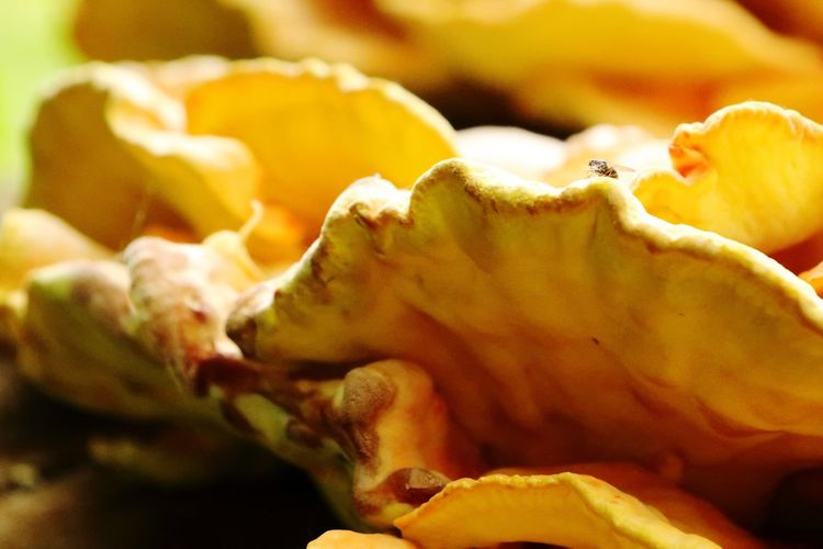 Full frame shot of fruit