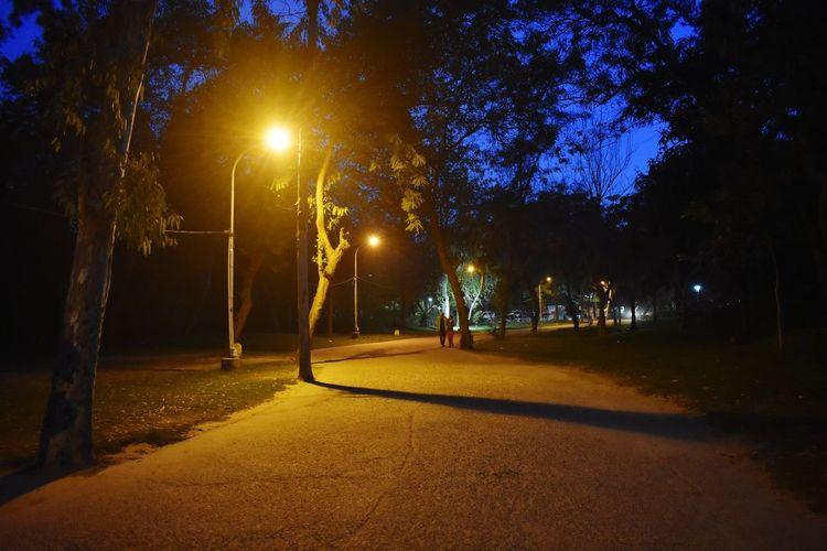 Street lights in park at night