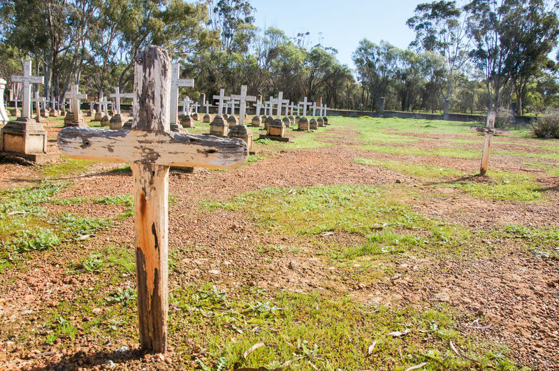 Large group of organised crosses on headstones at the New Norcia Cemetery in New Norcia, Western Australia. Australia Burial Ground Cemetery Cross Crosses Gravestones Graveyard Headstones Landscape Nature New Norcia Peaceful Religious  Rememberance Rest In Peace Resting Place Rows Of Things Rustic Spiritual Symbolic  Trees Weathered Western White Wood