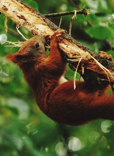 Eichhörnchen...,