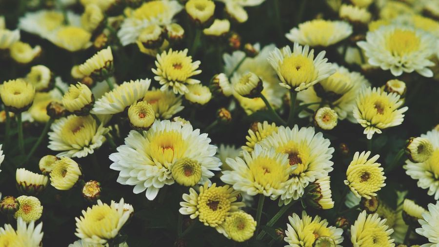 Full Frame Shot of Yellow Flowers