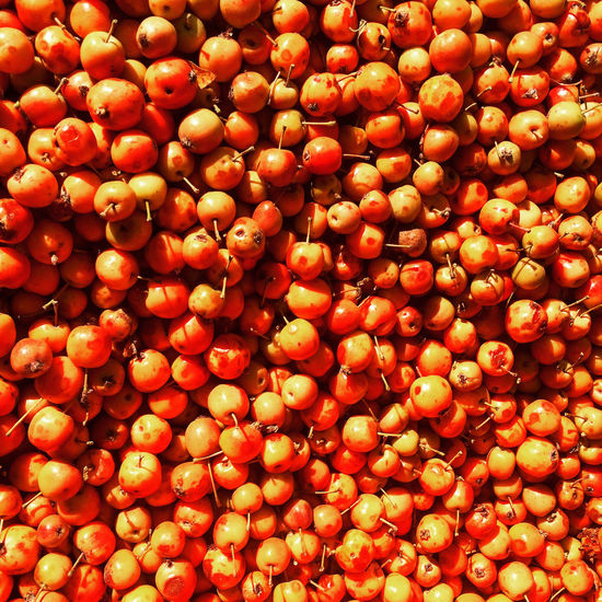 Crab apple harvest in September. Abundance Backgrounds Close-up Crab Apple Tree Crab Apples Extreme Close Up Fruit Harvest Orange Red September