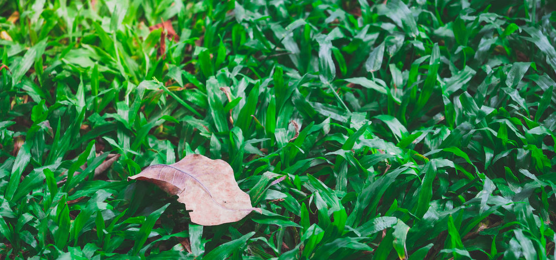 High angle view of leaves on field