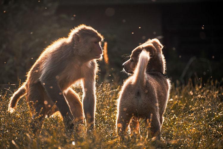 View of monkey on field