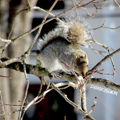 -<} F Σ L L U P {>- Squirrel Streetphotography Animals Nature_collection Climbing Nature Eyem Best Shots Happy Valentine's Day