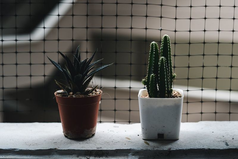 Close-Up Of Cactus Potted Plants On Window Sill